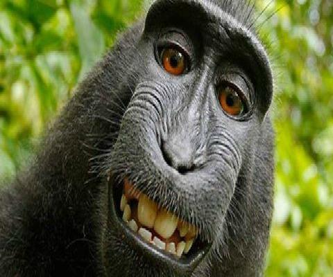 القرد و حقوق الملكيّة ل